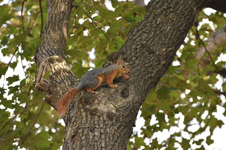 animal life Squirrel Tree Animal Themes Animal Plant Animal Wildlife One Animal Animals In The Wild Mammal Tree Trunk Trunk Nature Branch Vertebrate Rodent No People Day Low Angle View Climbing Outdoors