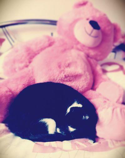 Cat Doudou ❤ First Eyeem Photo