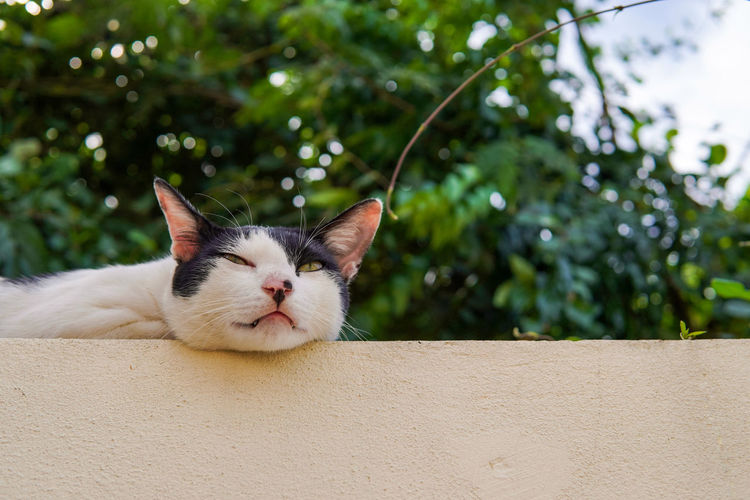 Lazy cat lying on the fence