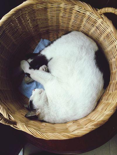 a cat in basket