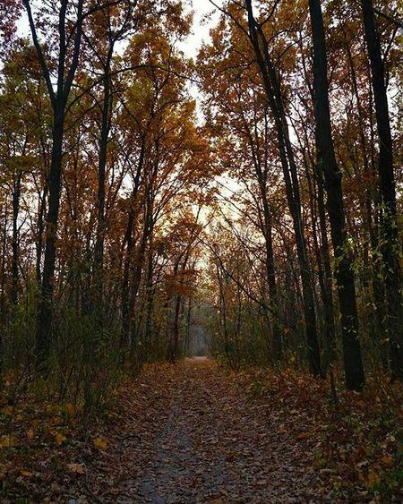 Kyiv Kiev Fall Autumn Leaves Trees Path Trail Lane Track Orange Київ осінь дерева Киев осень деревья листва помаранчевий оранжевый Тропа путь Дорога шлях Kievblog