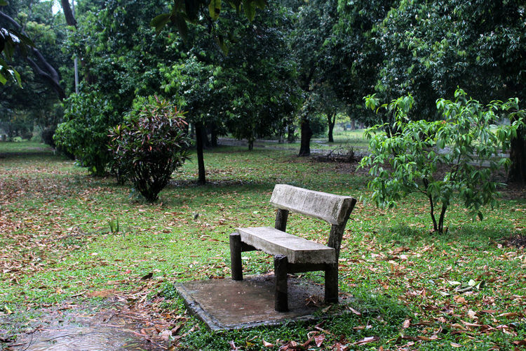 Plant Tree Seat Bench Nature Park Growth Green Color Grass Day Tranquility Park - Man Made Space No People Empty Park Bench Outdoors Beauty In Nature Tranquil Scene Leaf Absence