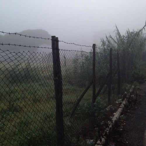 Fog Silhouette