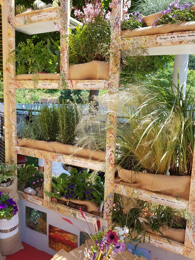 green wall for balcony Project Festival Del Verde E Del Paesaggio Wood - Material Composition Of Flowers Warm Colors Low Angle View Structure And Nature Greenhouse Flower Plant Nursery Multi Colored Retail  Plant #FREIHEITBERLIN The Architect - 2018 EyeEm Awards The Creative - 2018 EyeEm Awards