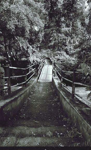 These be the dark roads boy.! Monochrome Monochrome_Monday Monochromatic Bridges Forest Darkness And Light Blackandwhite Old Creepy Pathway