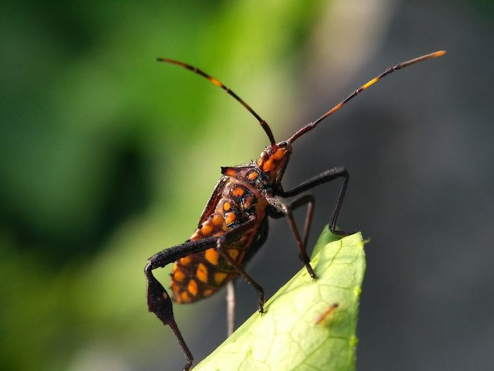 serangga Insect