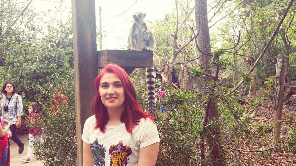 Enllamas Pelirroja Redhair Smile Zoo Animal Girl Madrid Faunia Lemur