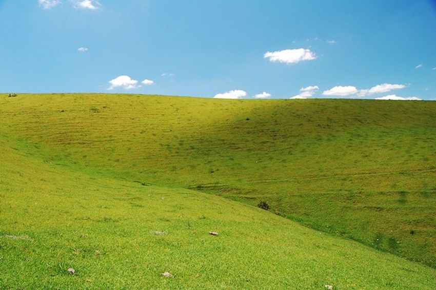 Scenics Rural Scene Beauty In Nature Meadow Outdoors No People Day Agriculture Field Landscape Green Color Grass Nature Sky Summer Nature Reserve Freshness