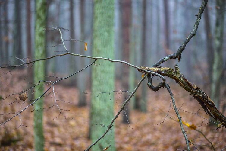 Tree Plant Focus On Foreground No People Nature Forest Day Land Branch Tranquility Outdoors Growth Dead Plant Dry Close-up Selective Focus Beauty In Nature Plant Stem Bare Tree Fence Wilted Plant