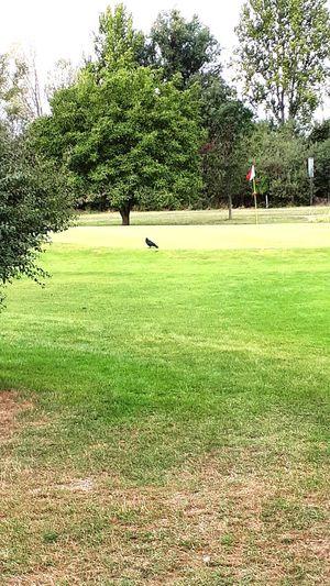 Golfer Golf
