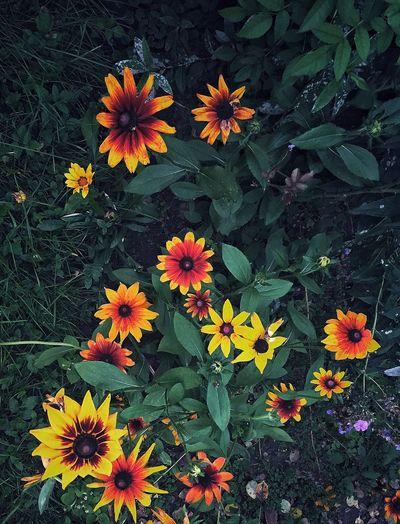 Endofsummer Flowerpower