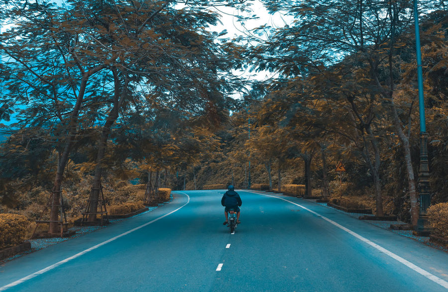 Alone Autumn Beauty In Nature Bike Branch Day Full Length Nature One Person Outdoors People Real People Rear View Ride Road Scenics The Way Forward Transportation Tree