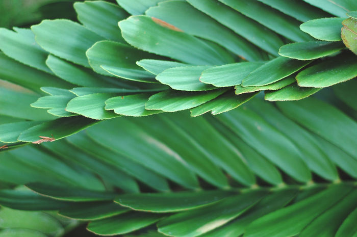 Garden Leaf Beauty In Nature Close-up Day Flora Fragility Freshness Garden Garden Photography Garden Plants Green Green Color Greenspace Growth Leaf Leaf 🍂 Leaves Leaves🌿 Lush - Description Nature No People Outdoors Plant Plant Plants And Flowers