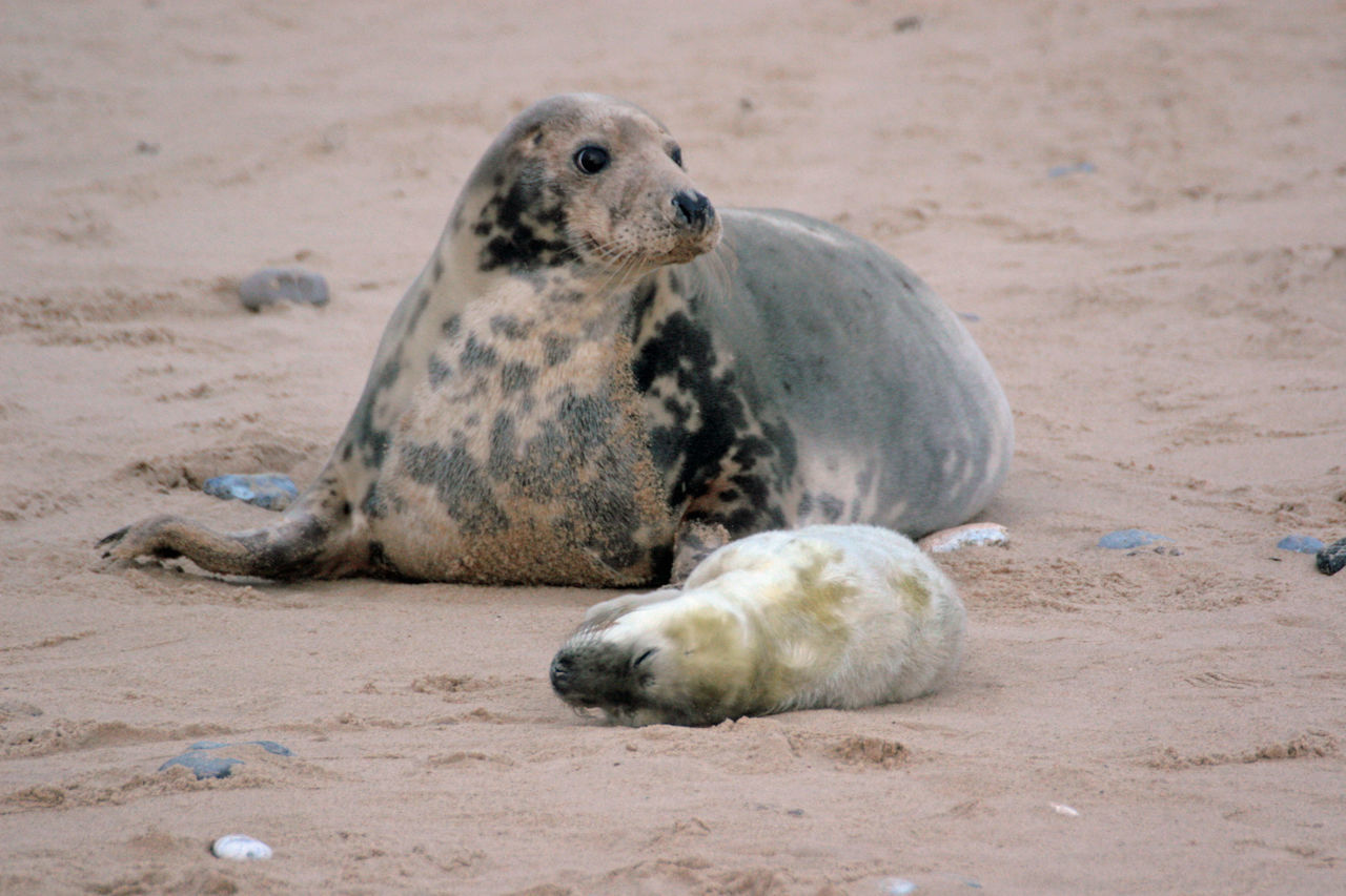 Two Seals On The Beach