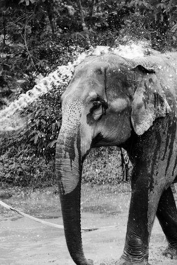 Animal Themes Elephant Animal Mammal One Animal Day Nature