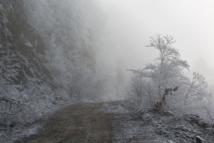 View of trees on snow covered land