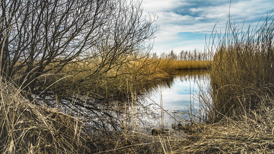Bare Tree Beauty In Nature Cloud - Sky Day Grass Lake Nature No People Non-urban Scene Outdoors Plant Reflection Scenics - Nature Sky Tranquil Scene Tranquility Tree Water