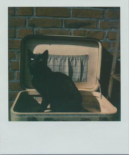 Taking Photos Having Fun Taking Pictures Polaroid Pictures Impossible Project Real Polaroid Polaroid Polaroid Camera Sx-70 Polaroid SX-70