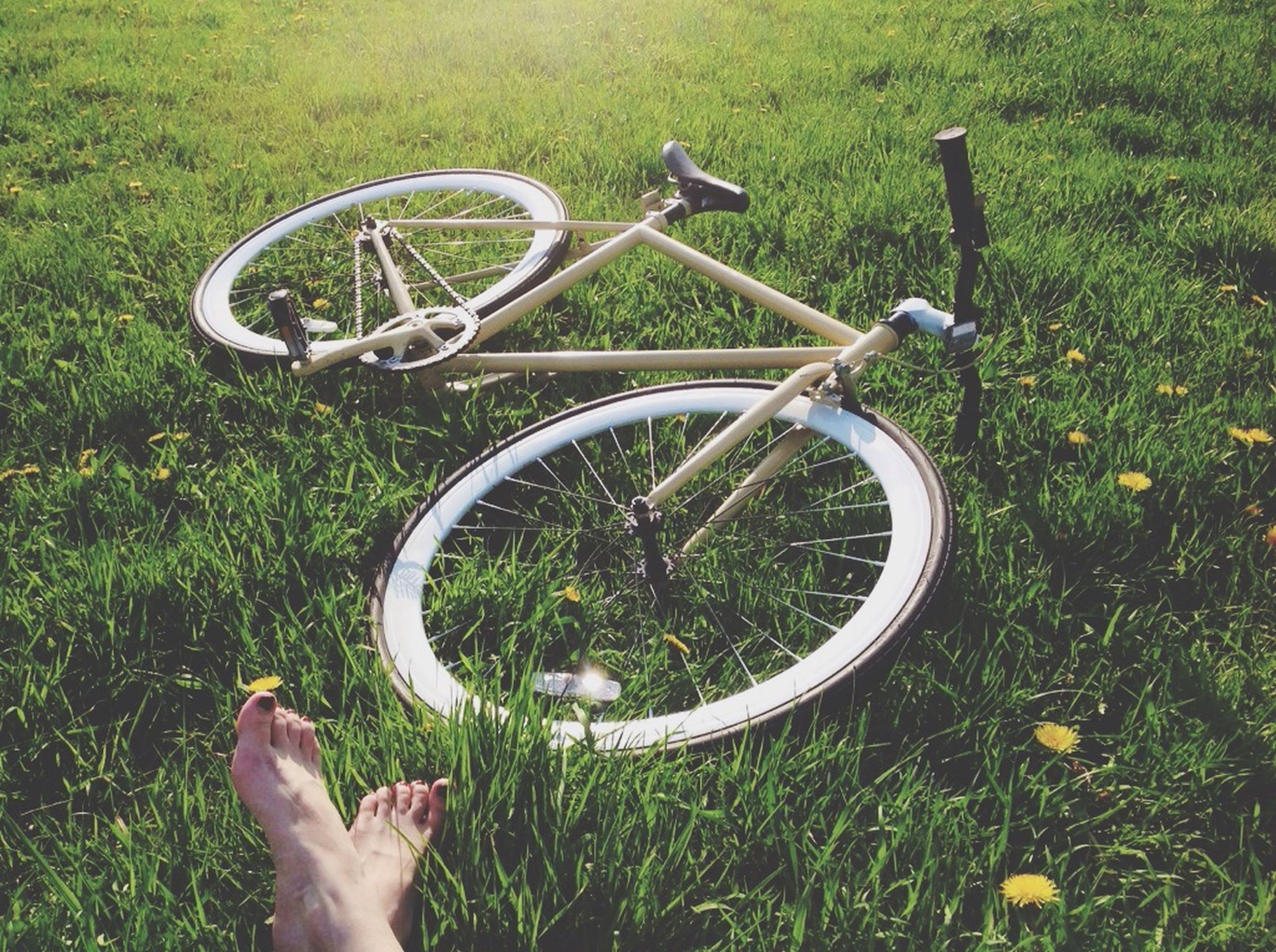 bicycle, grass, transportation, part of, low section, land vehicle, field, mode of transport, cropped, plant, outdoors, grassy, wheel, day, growth, sunlight, high angle view