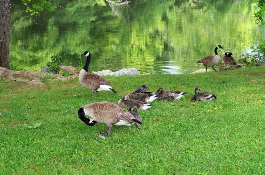Relaxing on the Riverwalk Animal Themes Animal Wildlife Animals In The Wild Beauty In Nature Bird Day Full Length Grass Lake Nature No People Outdoors Water