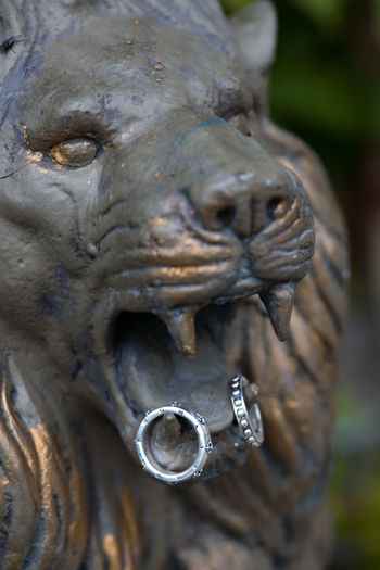 Close-up of rings hanging on lion statue