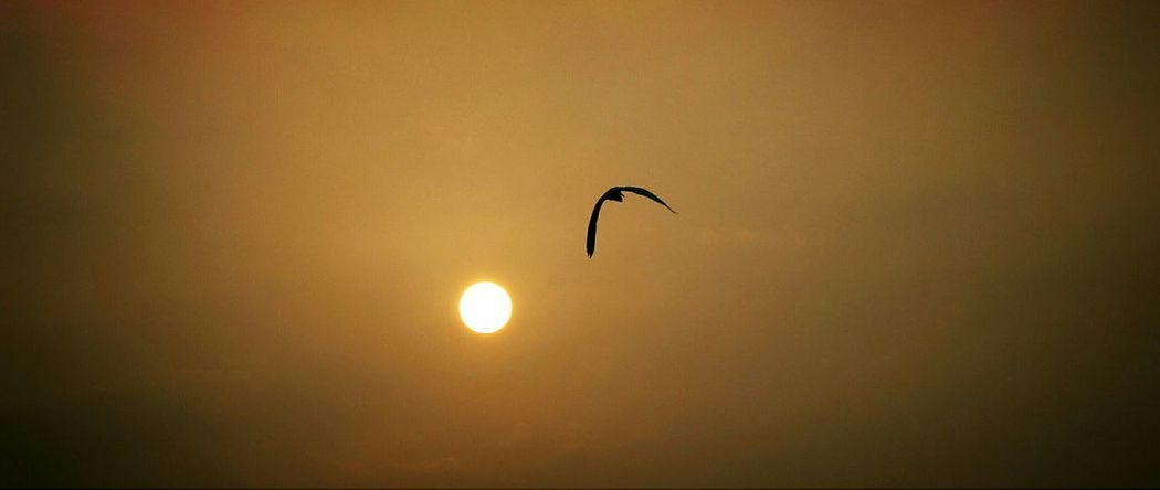 Birds Sunset Fog City Fog In The Trees Bird Photography Flying Aftrnoon Sunset_collection Abandoned Places Alone