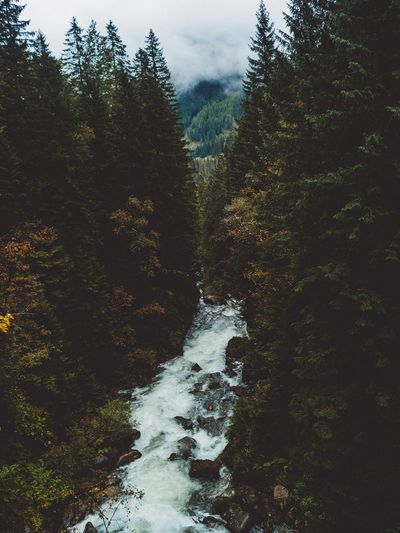 Lost In The Landscape Tree Forest Nature Beauty In Nature Water No People Scenics Tranquil Scene Day Outdoors Tranquility Growth Sky Mountain Waterfall