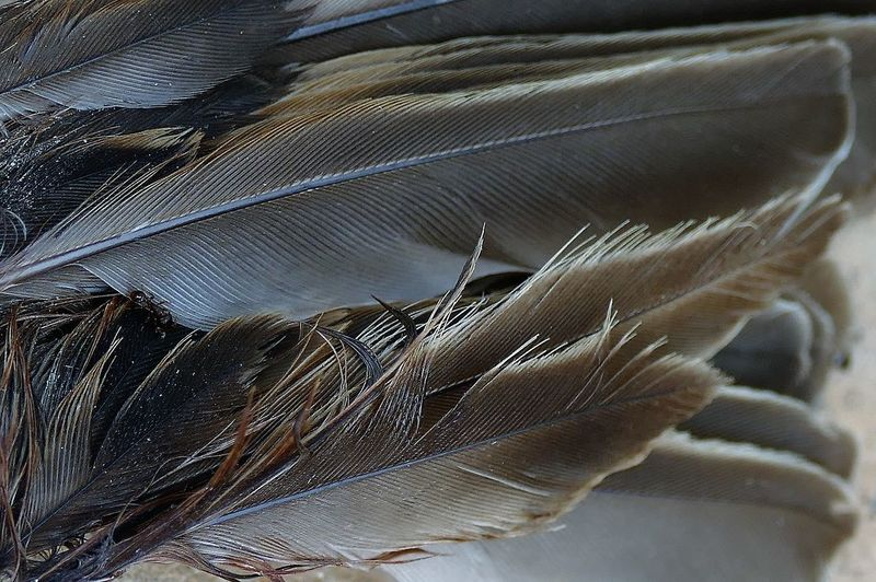Backgrounds Close-up Day Feather  Focus On Foreground Fragility Hair High Angle View Indoors  Lightweight Nature No People Pattern Selective Focus Softness Still Life Textile Vulnerability