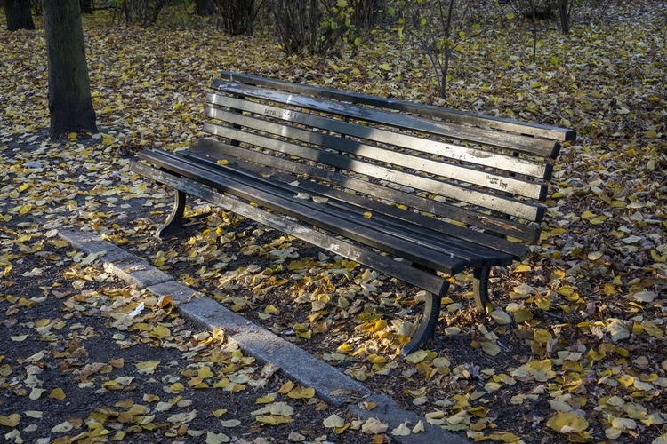 Two Park Benches in Autumn Berlin Germany 🇩🇪 Deutschland Color Image Outdoors No People Sun Park Bench Two Objects Leaves Autumn Reflection Park Nature Tree Brown Autumn colors Season  Seat Absence Empty Idyllic Tranquility Tranquil Scene