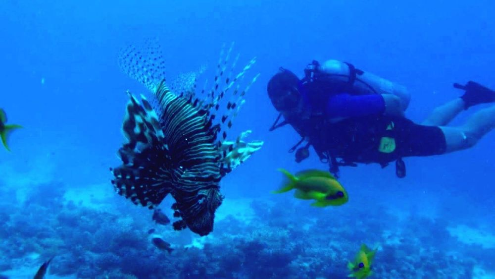 Underwater Nature Sea Life Scuba Diving Fish Red Sea