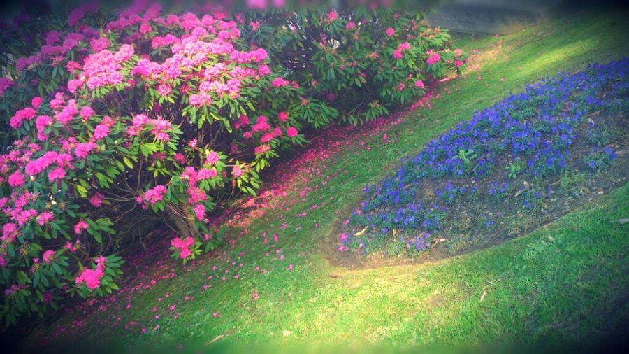 Vuelve El Color A La Ciudad Street Flowers