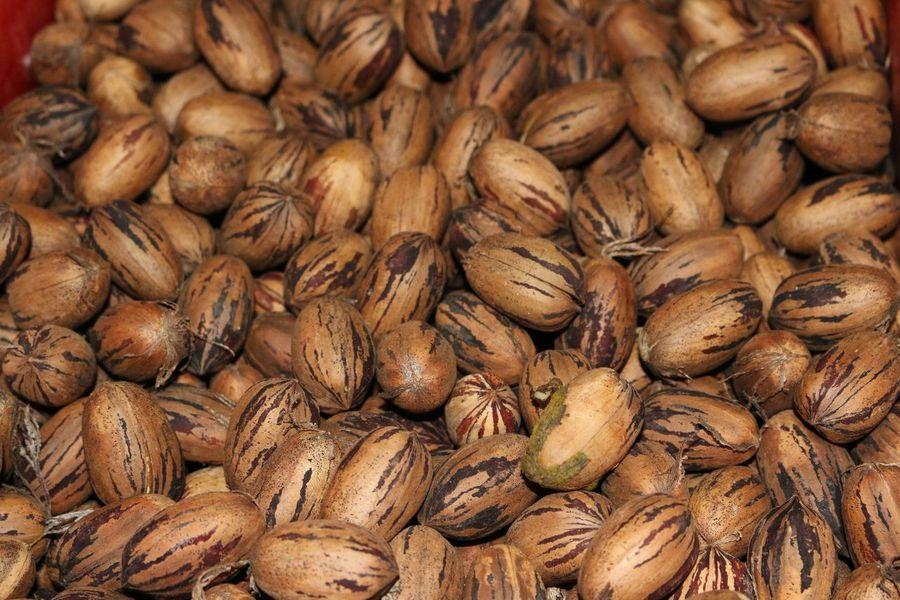 EyeEm Selects Walnut Walnuts Walnut Shell Walnut Heart Walnut Fruit Walnut Fruits Walnut Shells Nut Nuts Pecans, Nuts, Pecan Pecans Pecans Nuts Brown Brown Color Limassol Cyprus Limassol, Cyprus Cyprus