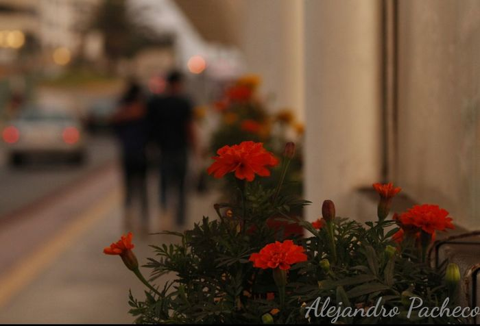 Lindas flores decorando el puente Vilena de Miraflores