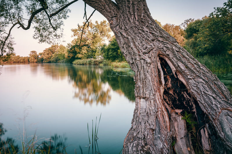 Lake and tree | Havelland, Germany 2016 Beauty In Nature Botany Branch Brandenburg Fragility Germany Growth Havelland Havelland Germany Lake Natural Condition Nature No People Non-urban Scene Reflection Remote Scenics Standing Water Tranquil Scene Tranquility Tree Tree Tree Trunk Tree Trunk Water