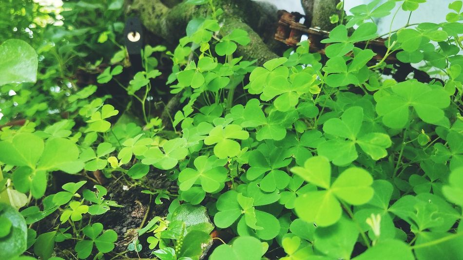 Leaf Water Close-up Plant Green Color Clover Plant Life Growing