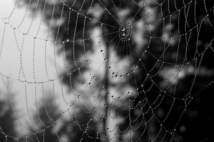 Full Frame Shot Of Wet Spider Web