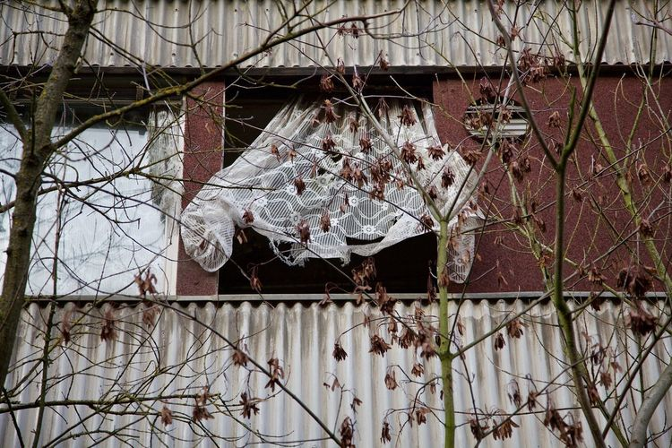 Low angle view of bare tree hanging in abandoned building