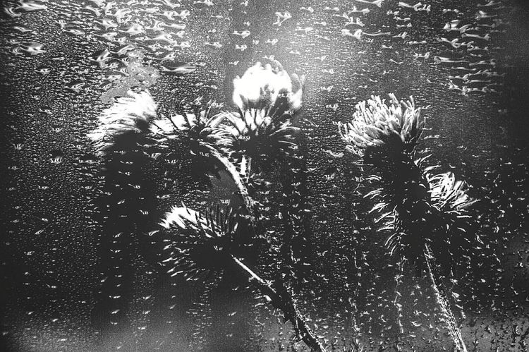 Day Flower Beauty In Nature Scenics Scenery In Thoughts With You Dramatic Scene Blackandwhite Drop Waterdrops Rain No People Water Backgrounds Full Frame Shadow Close-up RainDrop Fragility Wet Plant Life Water Drop