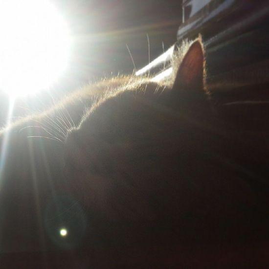 Sunbathing kitty Hobbes Tarn Pussycat Wintersun