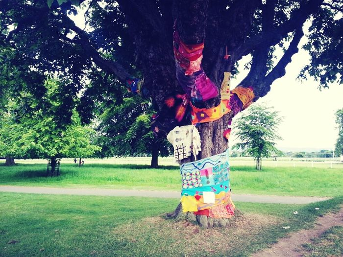 Hanging Out Taking Photos Photography Wish Tree