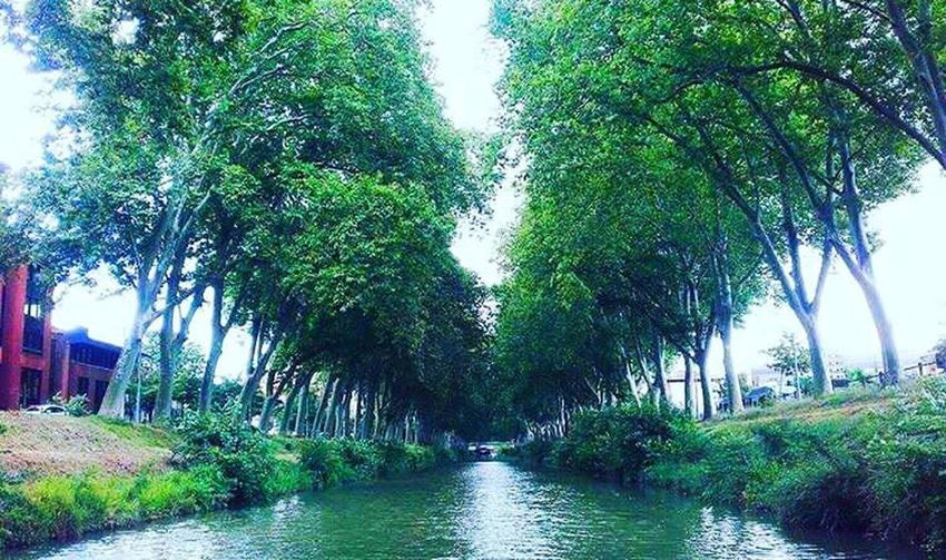 Tree Water River Green Color Nature Outdoors Beauty In Nature Day Plant Forest No People Lush Foliage Growth Nautical Vessel Sky Toulouse France