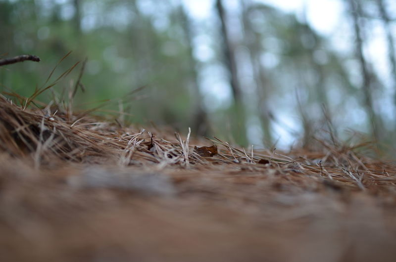 Surface Level Of Twigs In Forest