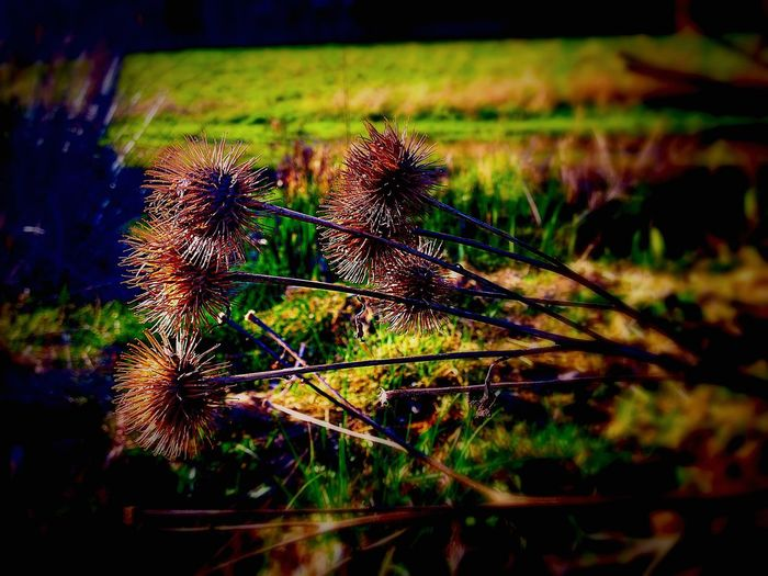 Spring Into Spring spiny lil thing Taking Photos Open Edit For Everyone Eyeem Philippines EyeEm Nature Lover Eyemm Nature Lover