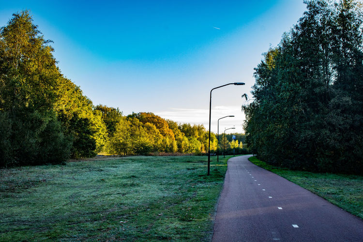 Plant Tree Road Green Color Nature Sky Transportation Growth The Way Forward Grass No People Beauty In Nature Direction Day Street Light Scenics - Nature Tranquil Scene Road Marking Tranquility Marking Outdoors Autumn Mood