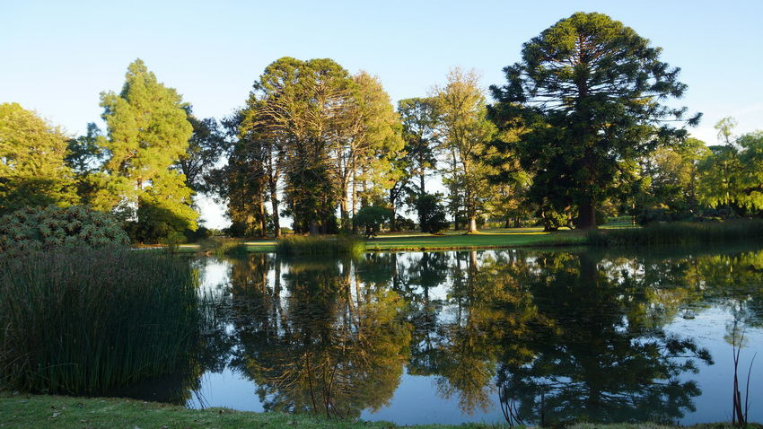 Beauty In Nature Day Lake Nature Non Urban Scene Reflection Scenics Shyraphotography Tree Victoria Australia Water Werribee