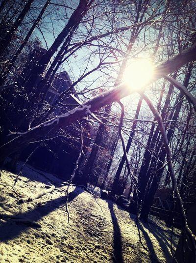 Winter Wonderland❄
