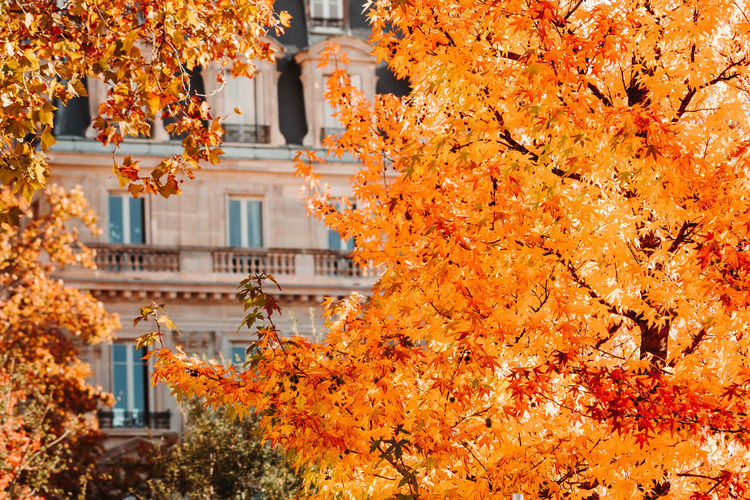 View through orange foliage on a house in Paris, France. The concept of Autumn time and October. Autumn Fall Tree Paris City View Orange Dry Window Mood October September Architecture Foliage Concept France Europe Day Wall Sunlight Copy Space Leaf Leaves Time Cozy Walk Stroll Beautiful Street House Built Structure Building Exterior Orange Color No People Outdoors
