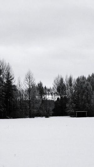 Winterwonderland Forest Snow ❄ Nature Photography PhonePhotography Winter December 2015 Sweden Snowday