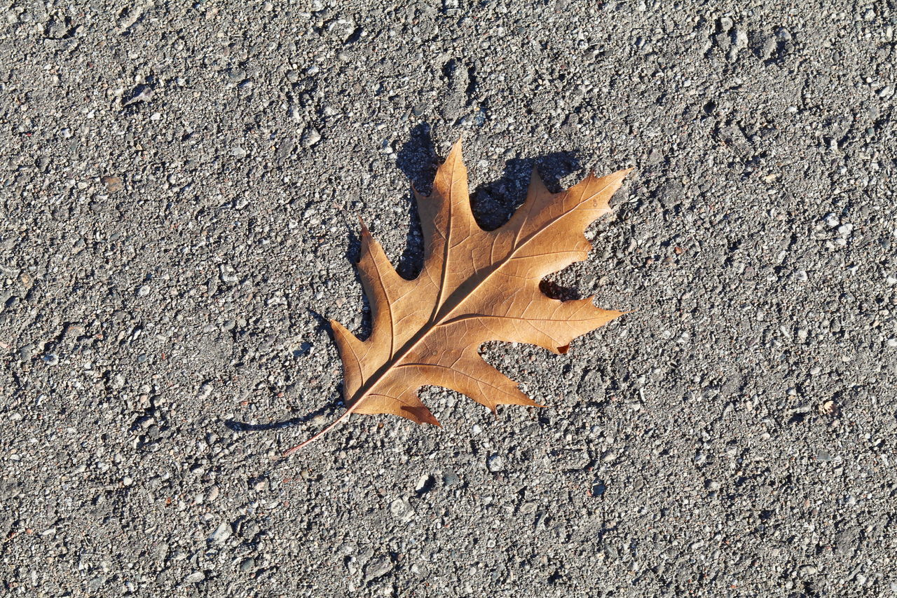 CLOSE-UP OF DRY LEAF ON THE GROUND