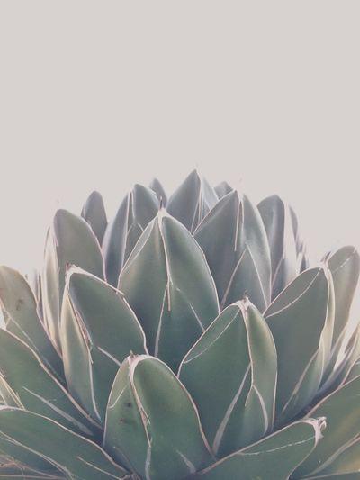 Minimalism Taking Photos Telling Stories Differently Hello World Enjoying Life Cactus EyeEmBestPics EyeEm Masterclass Eyeemmarket EyeEm Best Shots Getting Creative Tadaa Community EyeEm Gallery Eye4photography  Simplicity